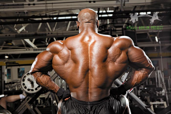 Aleda Costa: Bodybuilder Back Images