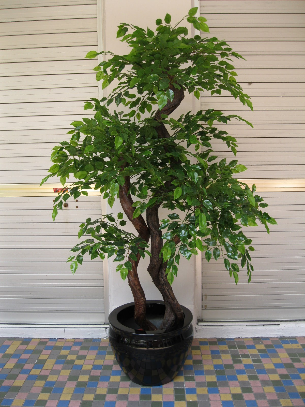 Hoi Kee Flower Shop 6ft Mini FicusBonsai With Fish Bowl Planter