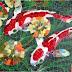 Liudmila VEDMETSKAYA, Mosaïste - Aquarelliste, artiste des Journées Portes Ouvertes des Artistes du 16e - Seiziem'Art / 11-12-13 octobre 2019