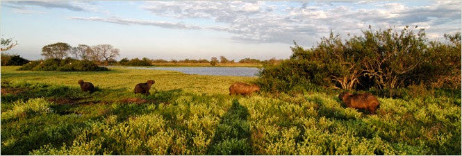 Resultado de imagen para ecosistema Herbazales