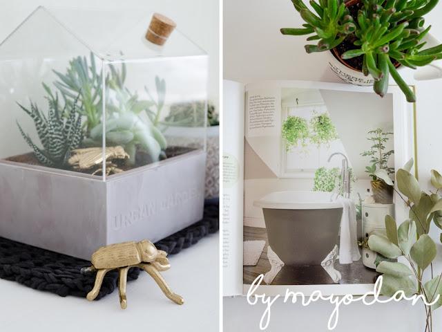 Zimmerpflanzenbuch