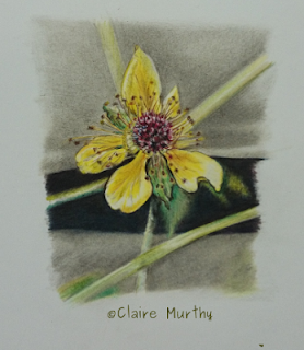 british contemporary botanical painting a yellow flower