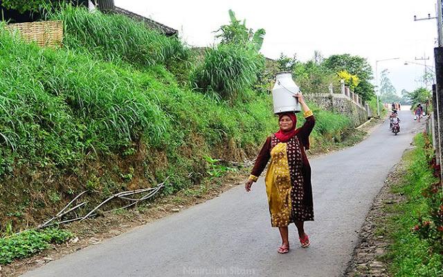 Ibu Siamah menyetor hasil perahan susu ke Koperas SAE Pujon