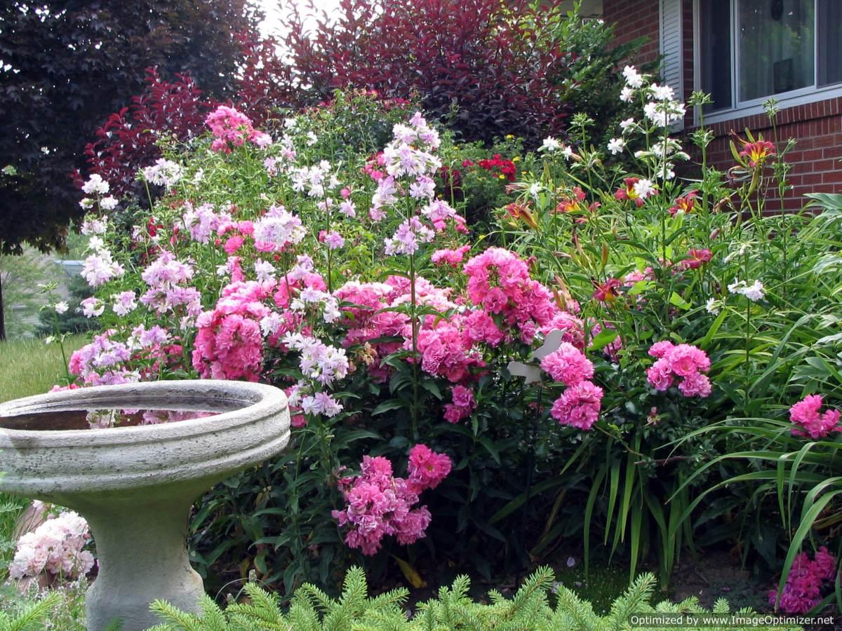 Beautiful Rose Garden Wallpaper rose garden wallpaper | free hd wallpaper