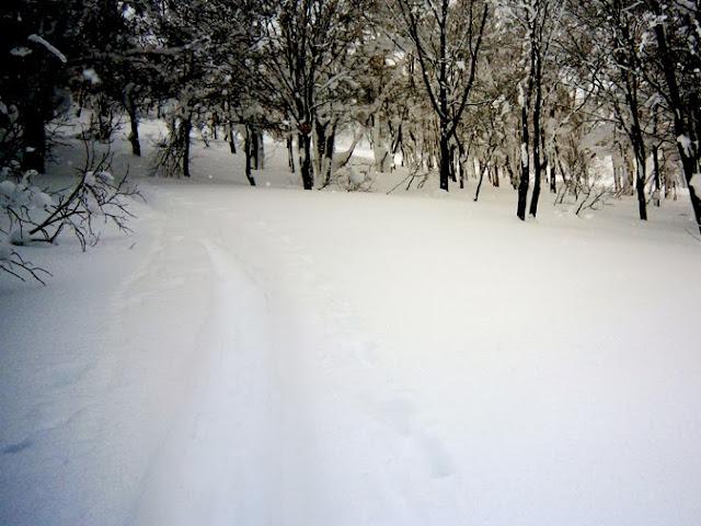雪の森へ出発