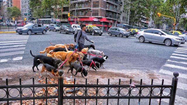 Paseadora con perros por la avenida