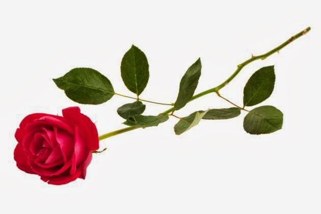 Foto Mawar Merah Bunga Valentine Day Hadiah Buat Pacar