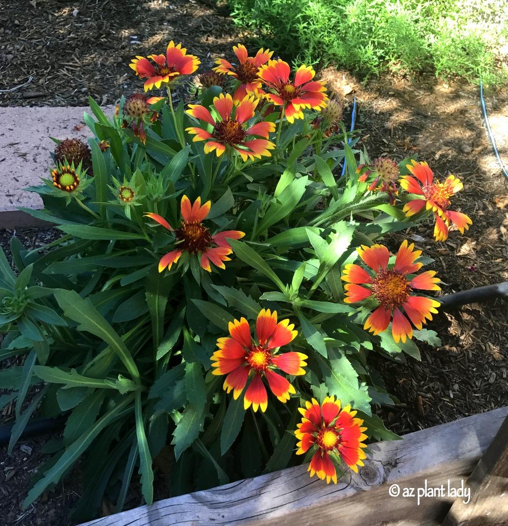 Video: Fall Gardening Tasks For The Southwest Garden