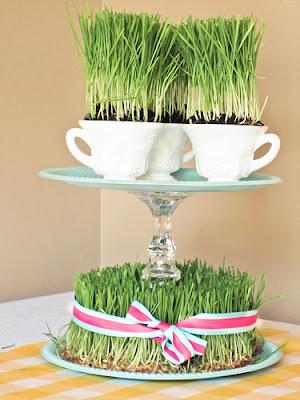 grass3 Easter Wheat Grass 9