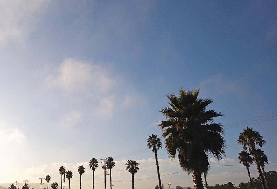 rząd wysokich palm, Santa Cruz, Kalifornia