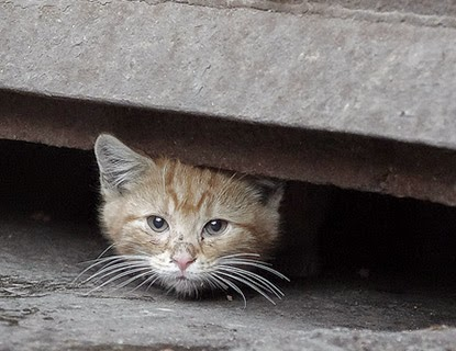 How To Treat Fleas In Feral Cats