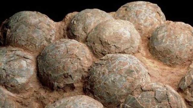 Hallan en Patagonia huevos de dinosaurio de 70 millones de años