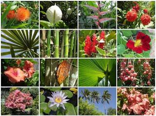 Pola Persebaran Jenis Tanah di Indonesia, Flora dan Fauna
