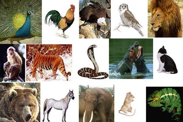 440 Gambar Hewan Laut Beserta Ciri Cirinya HD