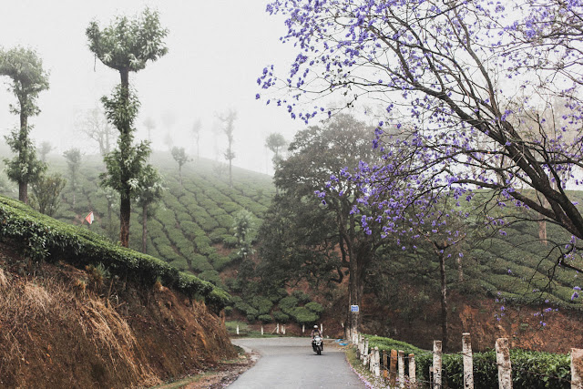 India Marlon Krieger Travel Kerela