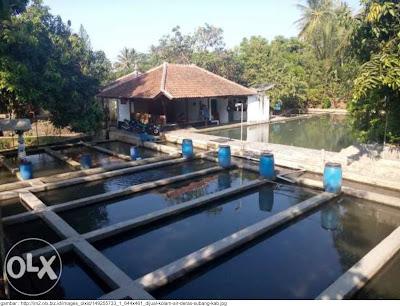 Wadah Budidaya Perikanan : Kolam Air Deras