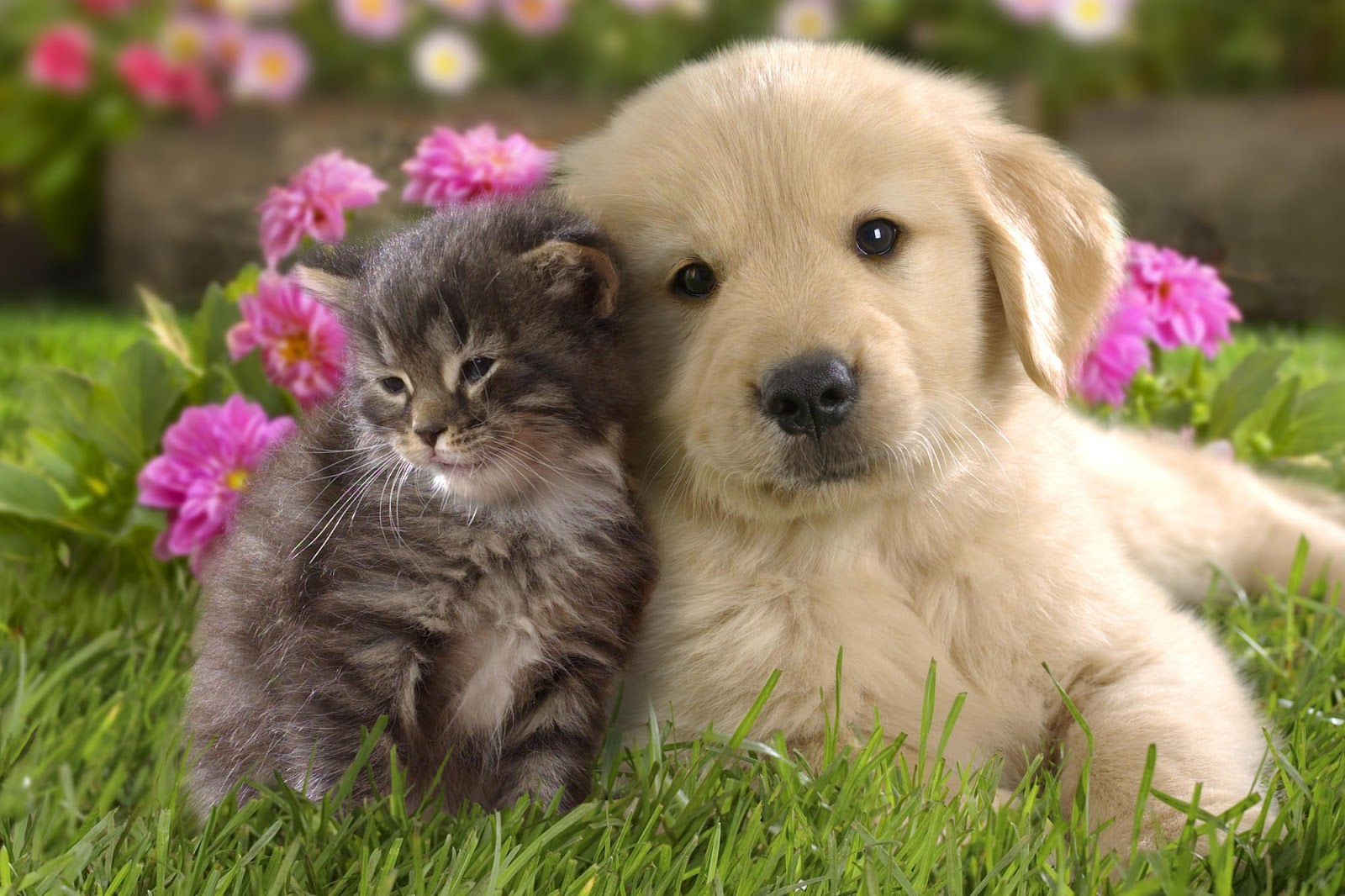 cuteness overload kitten and puppy wallpaper free money stuffs
