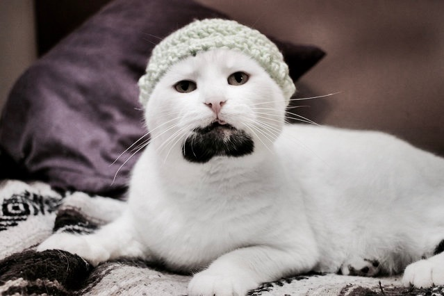 Hipster cat with a beard wearing a knit hat. Better with a mustache?