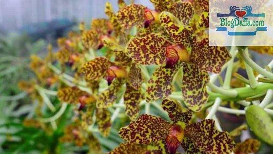 Pohon Anggrek Tebu termasuk flora langka di Indonesia