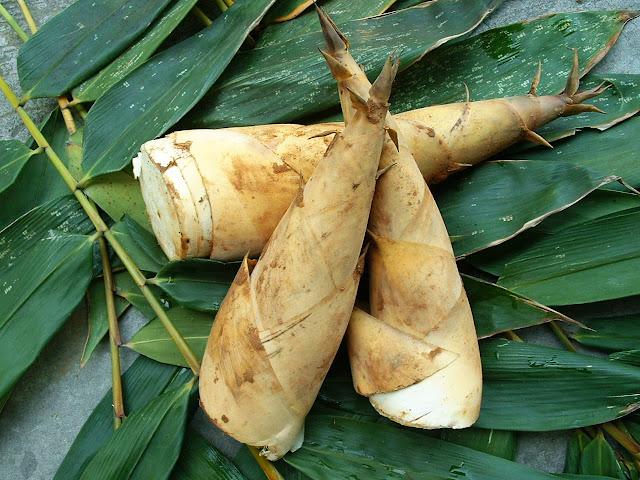 pędy bambusa na zdrowe włosy