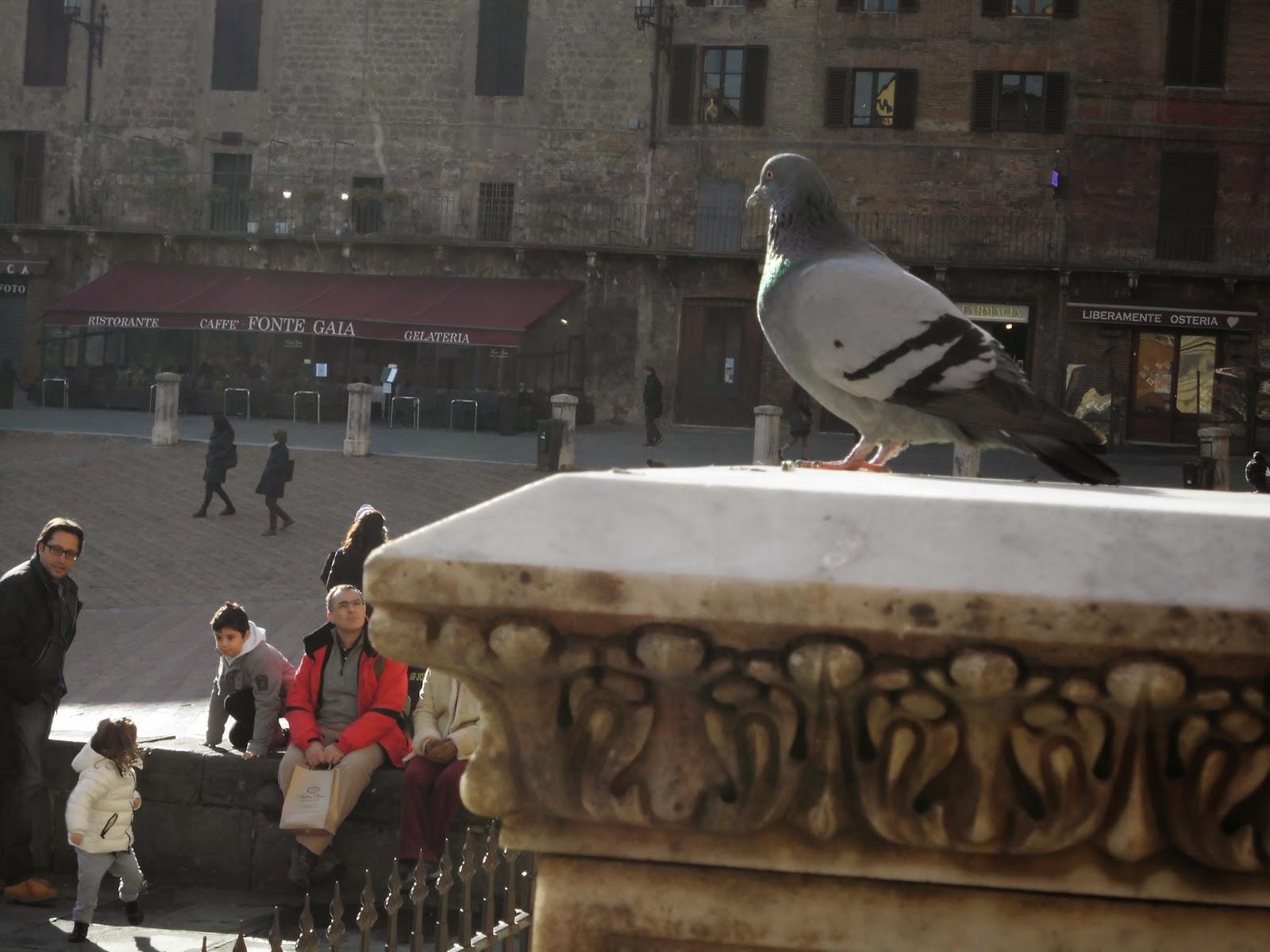 piccione ferito o in difficoltà cosa fare
