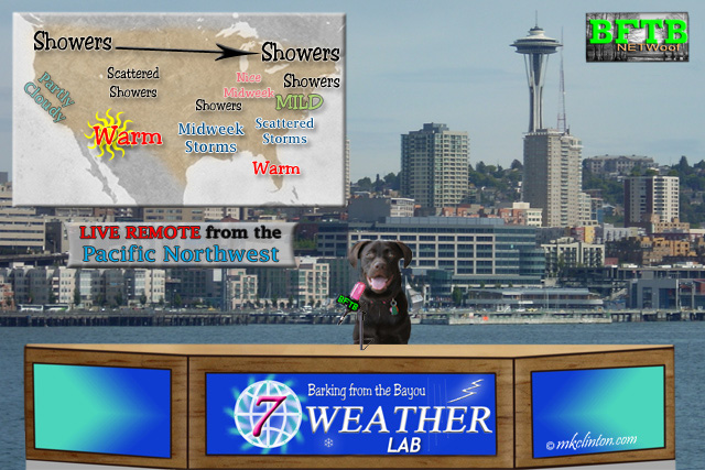 BFTB NETWoof Weather with Paisley the Labrador