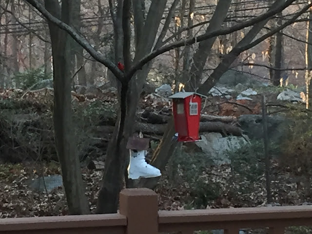 Venture & Roam: cardinal and other birds eating bird food, ski boot bird house