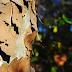 Η απάντηση του Δήμου σχετικά με κοπή τριών δένδρων στη Λαμία