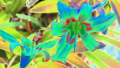Flor duplicada+negativo 255 JotaV