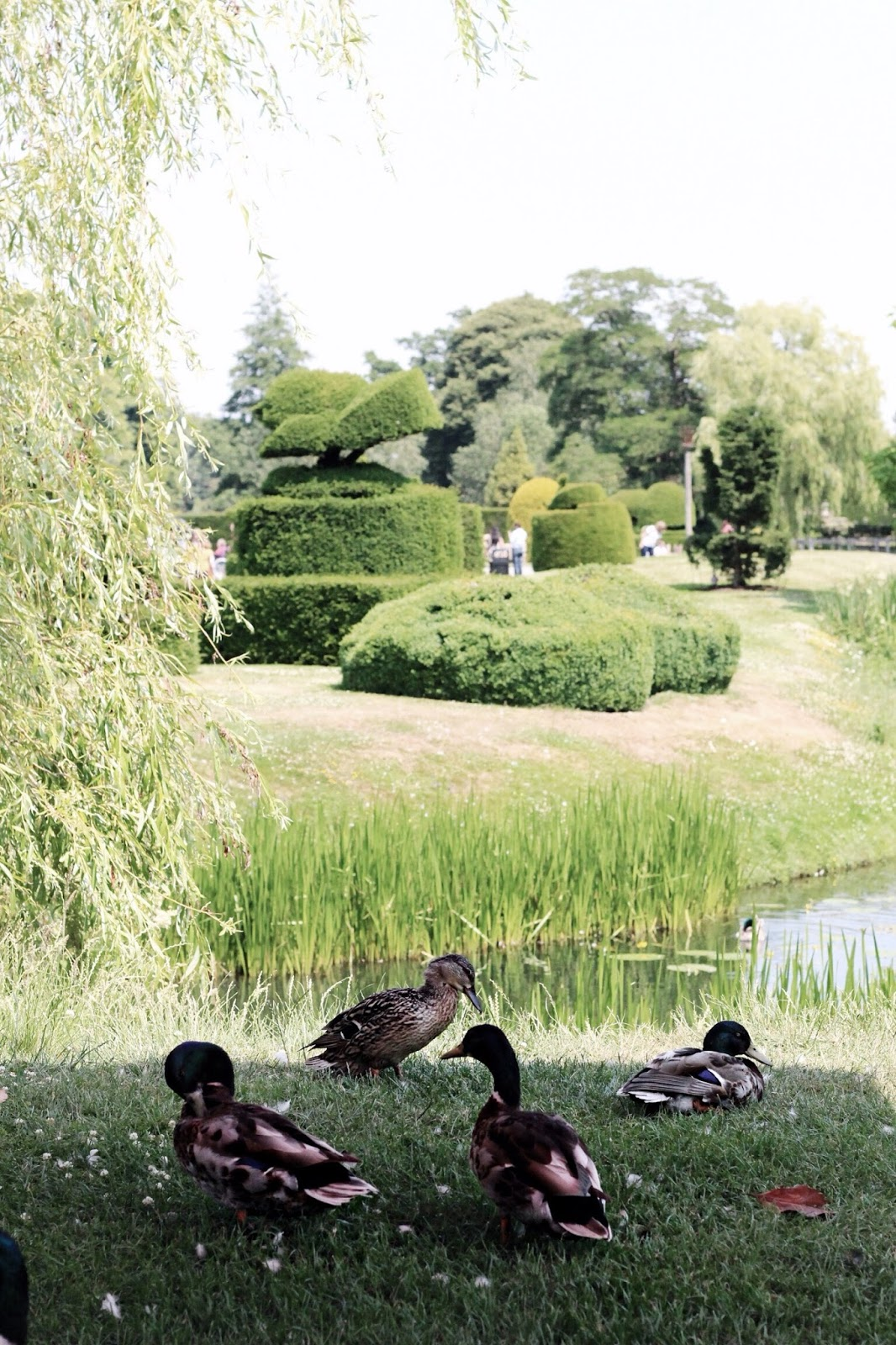 Ducks at Castle by Pond