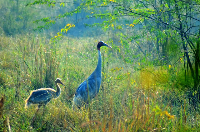 Top Five Beautiful Tourist Attractions of Bharatpur 3