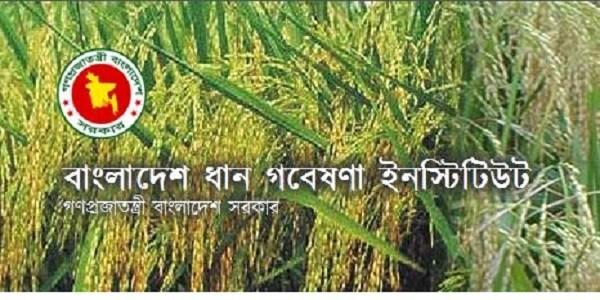 ধান গবেষণা ইনস্টিটিউটে চাকরির খবর - Bangladesh Rice Research Institute Job Circular