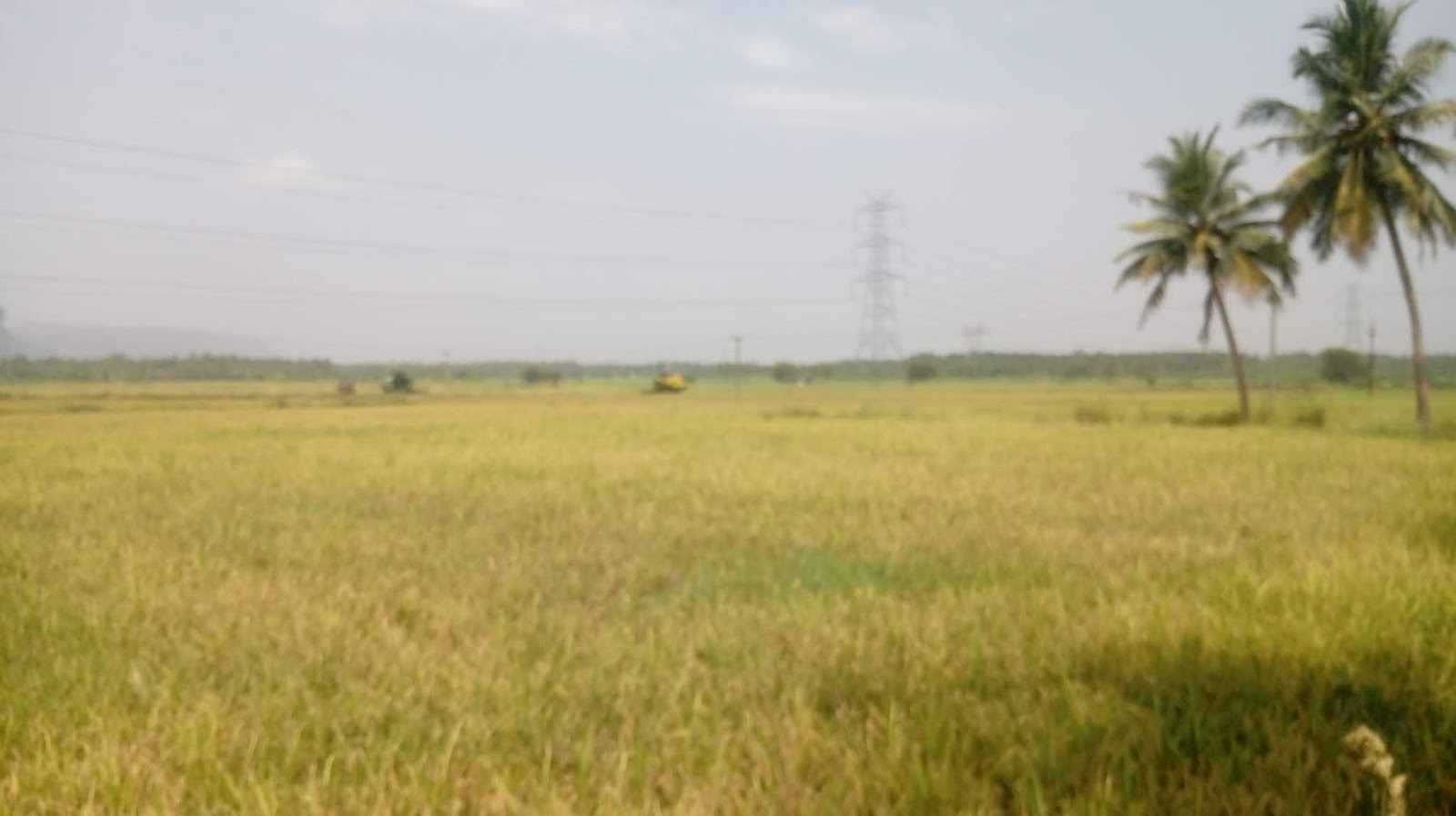 1 5 Acre's paddy cultivation land for sale in near sholavandan