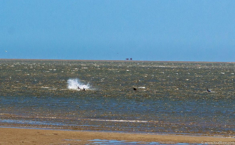 Walvis Bay Namibia | walvis bay Dolphins