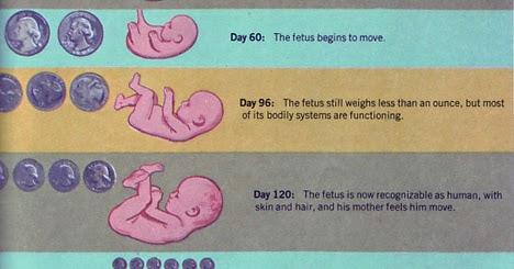 Kehamilan 6 7 Bulan Seperti Apakah The Irna Lestari
