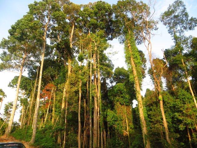 деревья Таиланда