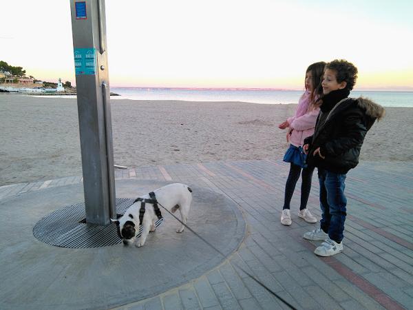paseo bulldog francés