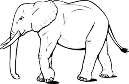 1030+ Gambar Sketsa Hewan Untuk Kolase Gratis Terbaru