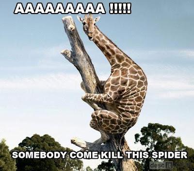 giraffe and spider