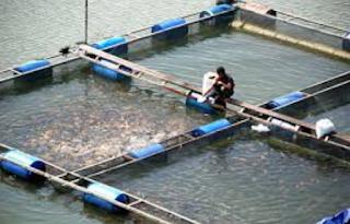 Syarat Budidaya Ikan Nila dі Jaring Terapung