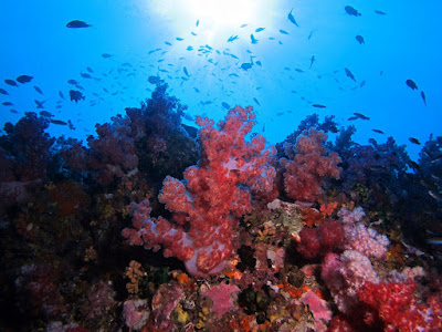 Photo of nice looking corals during diving Koh Lipe Island