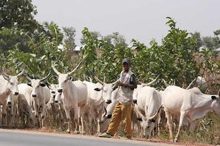 3 Fulani herdsmen reportedly missing in Enugu State