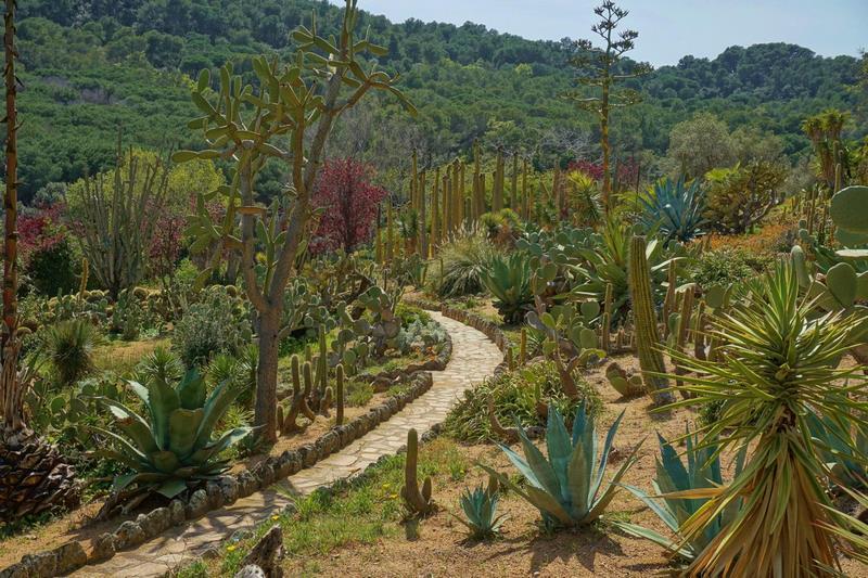 Jardín de cactus y suculentas junto al mar mediterráneo