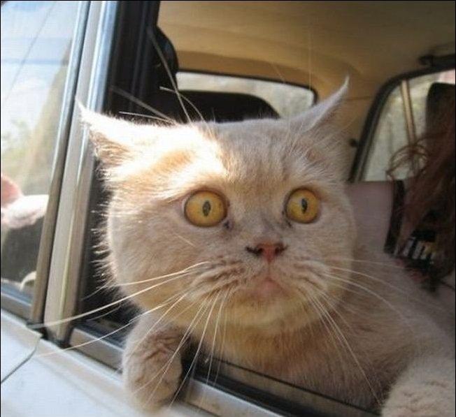 Funny cats (36 pics) | Amazing Creatures