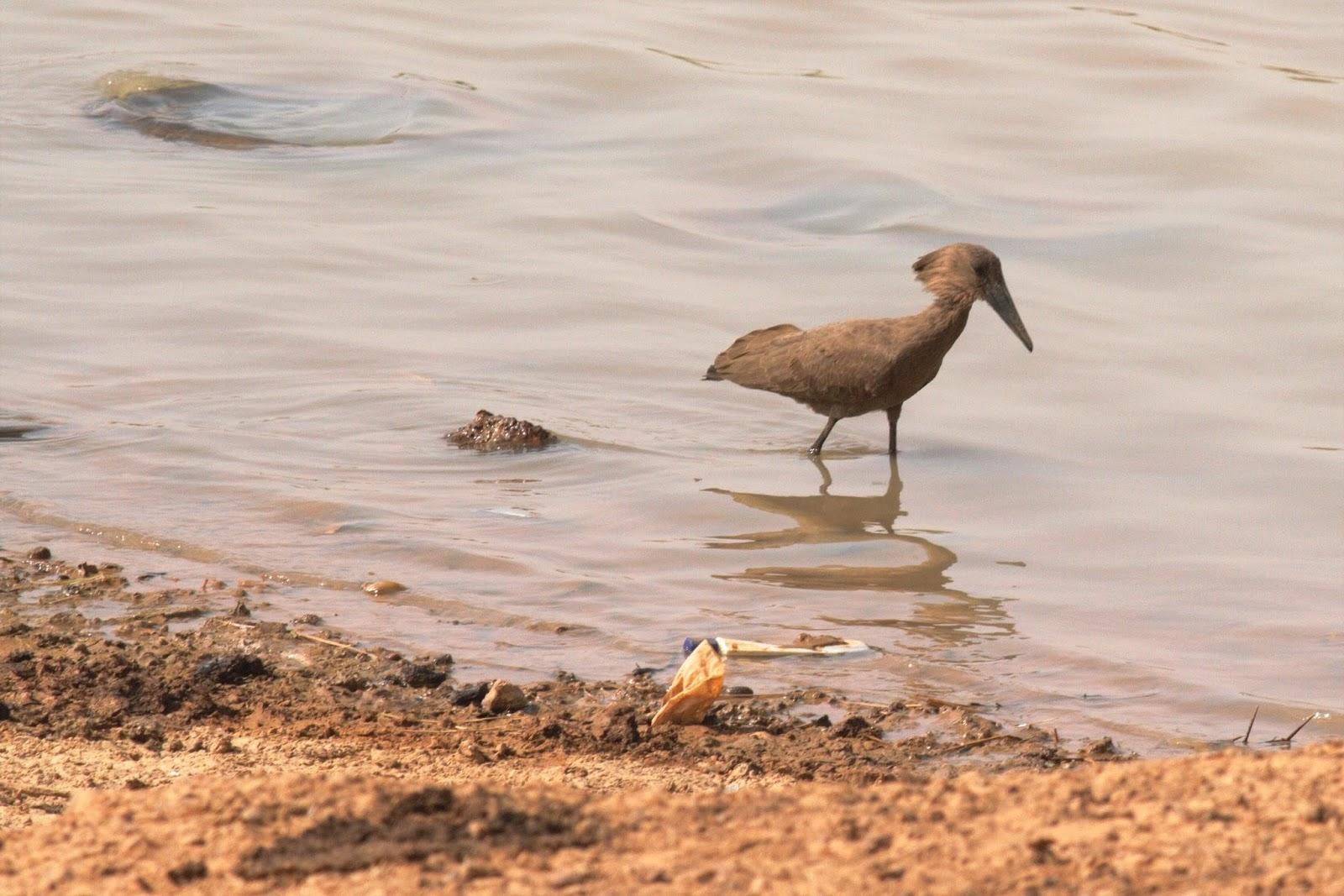 baiser les putes binta la salope mauritanienne