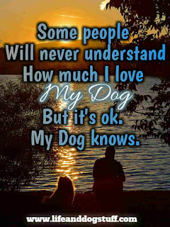 love my dog quotes sayings