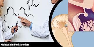 Melatoninin Fonksiyonları