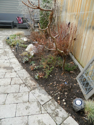 Leaside Toronto Back Garden Spring Cleanup After by Paul Jung Gardening Services--a Toronto Organic Gardening Company