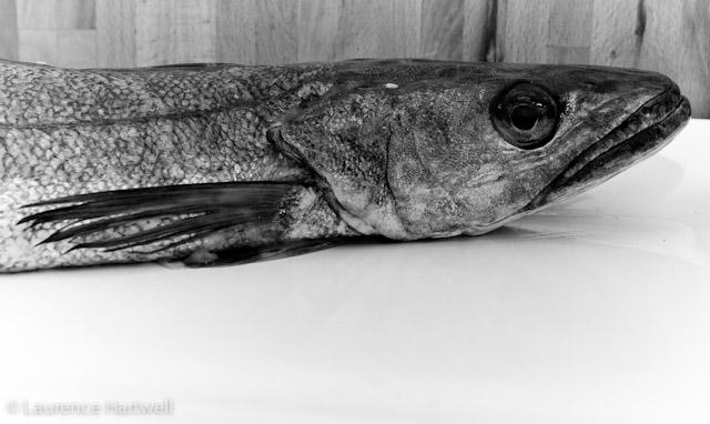 Bass Fishing Kitchen Decor