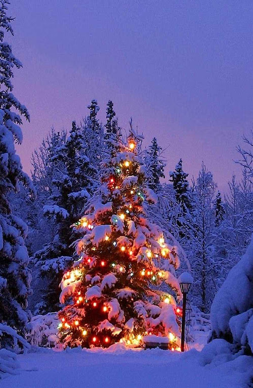 A Árvore de Natal: símbolo católico  pelo apostolado de São Bonifácio.